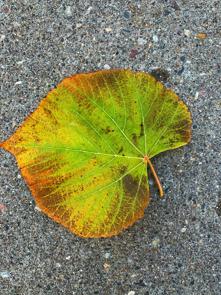 """""""Autumn is leaving its mellowness behind for its spiky, rotted stage. Don't remember summer even saying goodbye."""" ― David Mitchell, Cloud Atlas"""