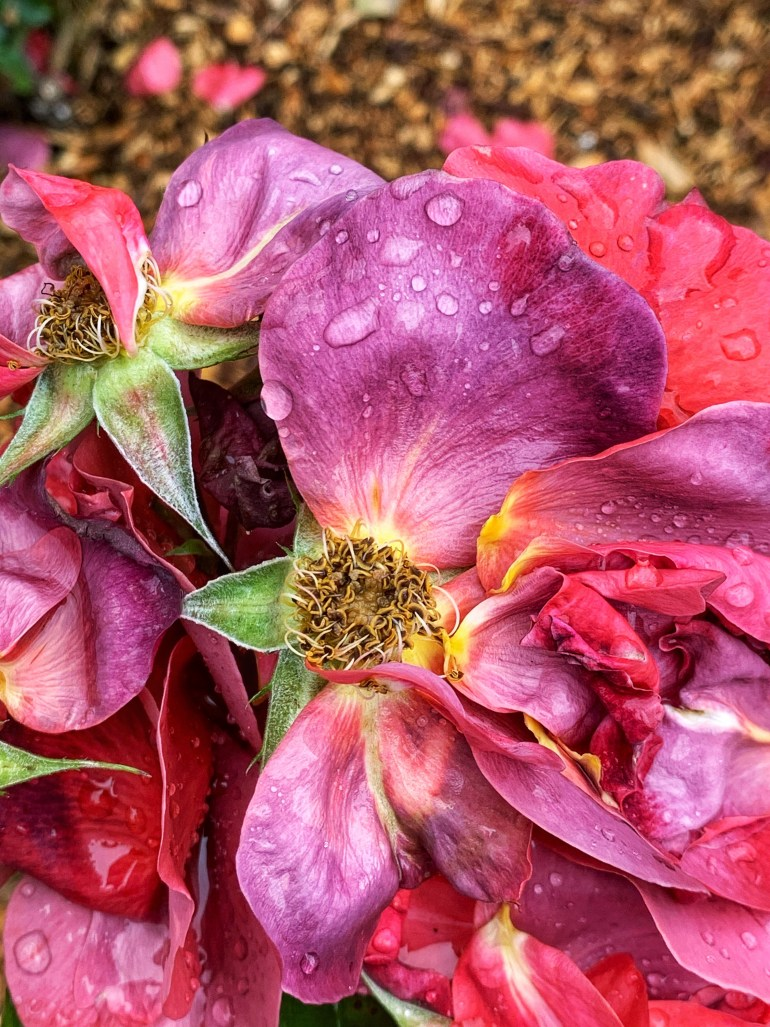 Mid-Summer Flowers at  Priest Point Park in Olympia, Washington