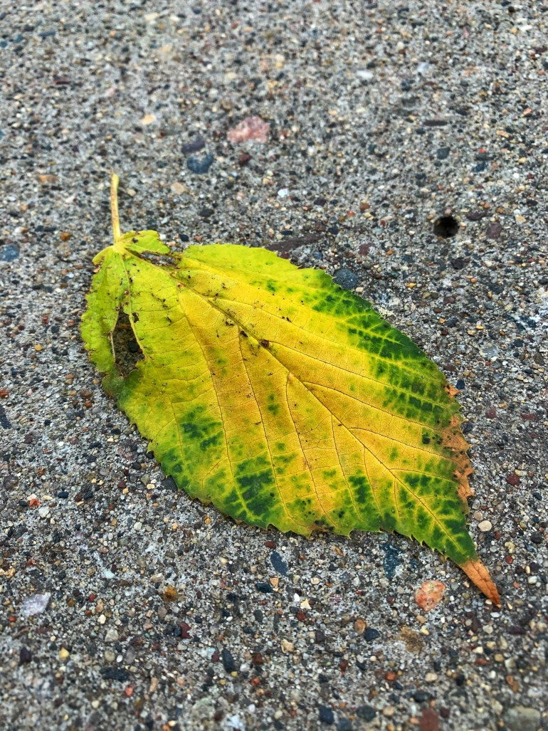 """""""Nature is especially beautiful in autumn and all seem unreal. Somewhere leaves still are green but orange red and yellow fire eats all. But nature is imperishable until winter and before funeral snowfall."""" ― Bryanna Reid, Boyle stories. Chat about nothig"""