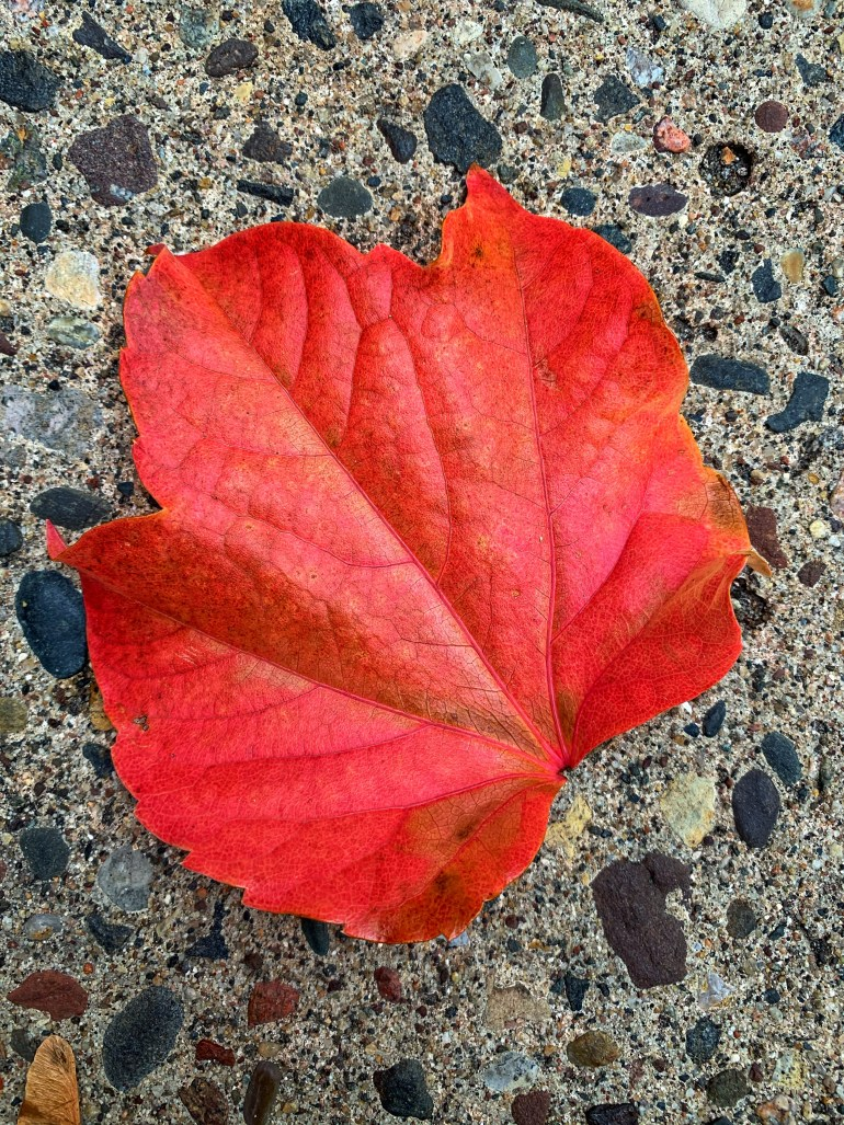 """The one red leaf, the last of its clan, That dances as often as dance it can, Hanging so light, and hanging so high, On the topmost twig that looks up at the sky."" ― Samuel Taylor Coleridge, Christabel"