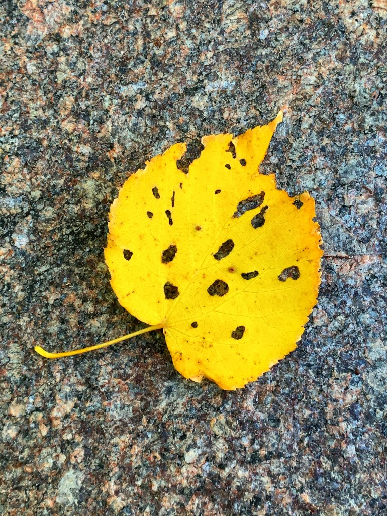 """""""But you can't plead with autumn. No. The midnight wind stalked through the woods, hooted to frighten you, swept everything away for the approaching winter, whirled the leaves. (""""The North"""")"""" ― Yevgeny Zamyatin, We"""
