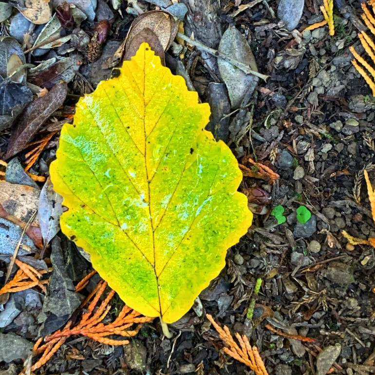 Warm Fall Colors at the Hoyt Arboretum in Portland, Oregon