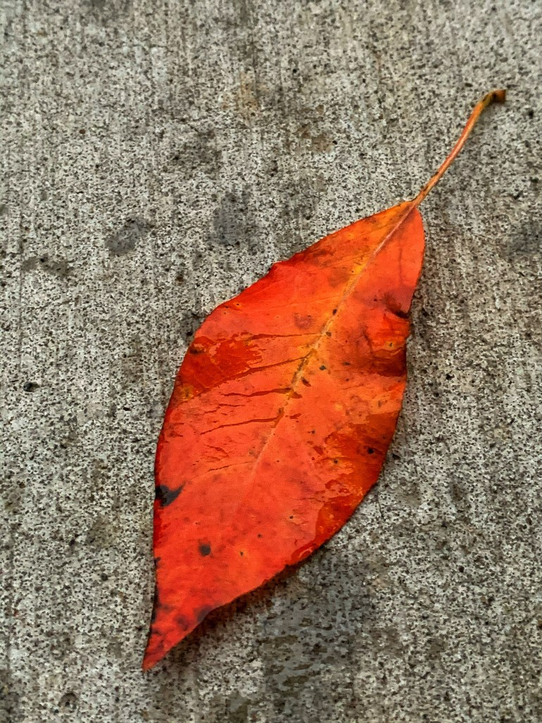 """""""I am Falling in love again with autumn, The smell of warm cider, The orange color leaves, Pumpkins everywhere and the crisp breeze, People walking or riding their bikes, Folks jogging or going on hikes, I love autumn for so many reasons, I must admit- This is my favorite season"""" ― Charmaine J Forde"""