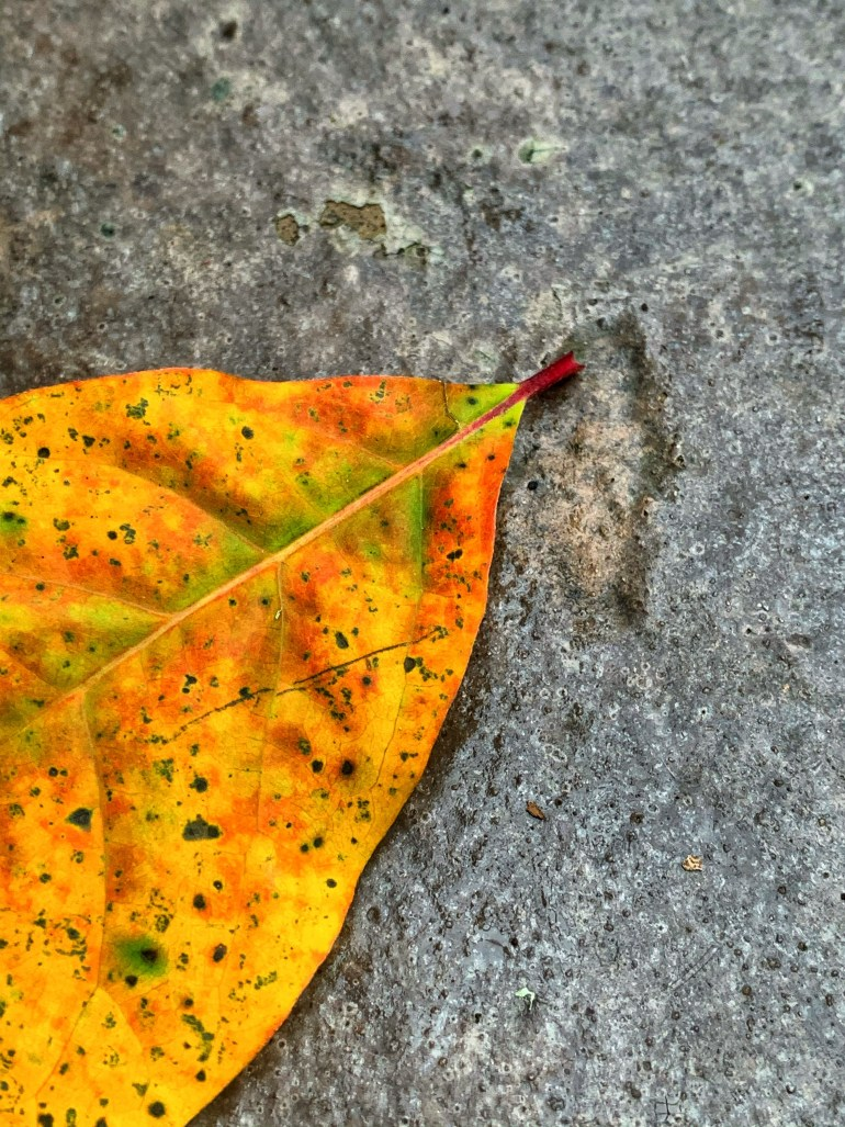 """""""Soon it will be autumn and we haven't the power to keep a single leaf from falling."""" ― Marty Rubin"""