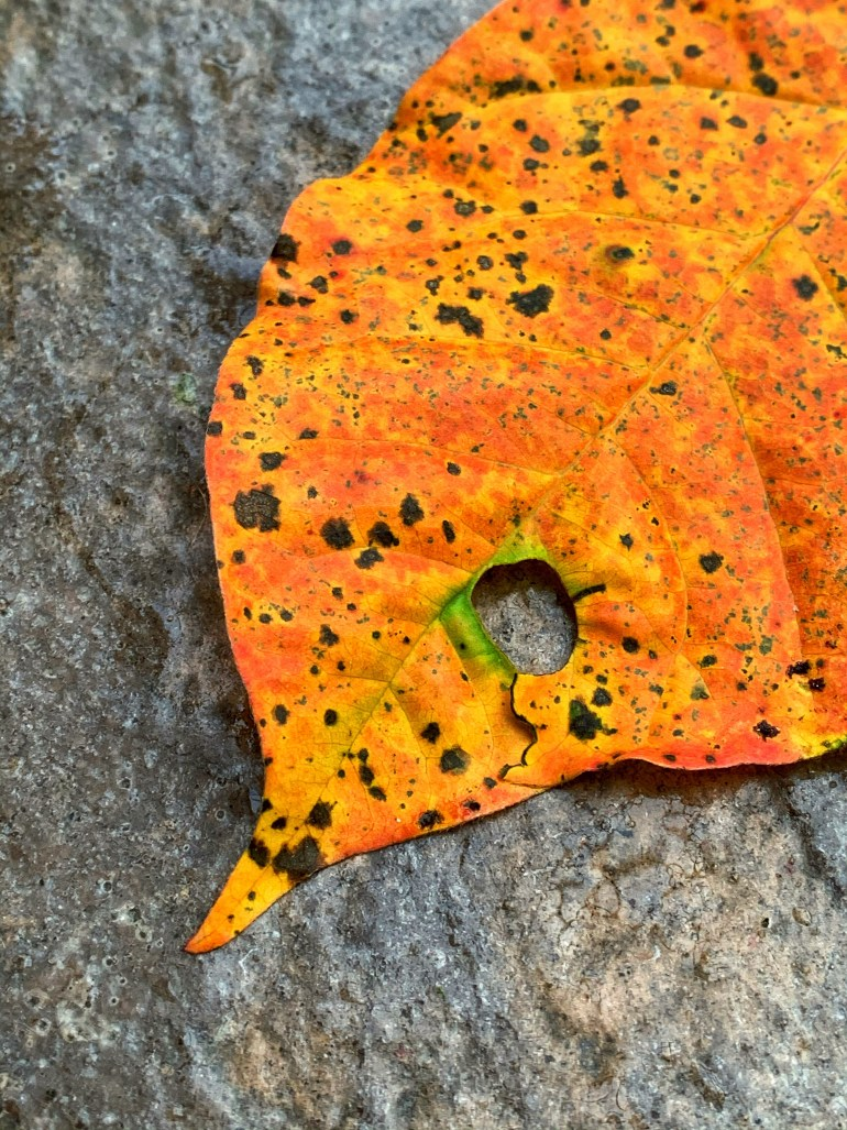 """""""There is a subtle magic in the falling of old leaves."""" ― Avijeet Das"""