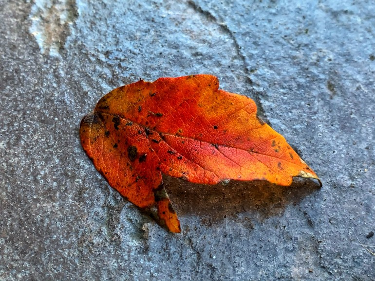 """""""FALLING IN LOVE WITH OCTOBER  Leaves descending to the ground, Orange, magenta, green & brown The cool crisp breezes in the air, Autumn season must be here"""" ― Charmaine J Forde"""