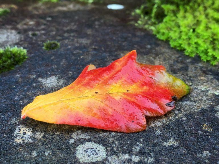 A Fall Morning at Hoyt Arboretum in Portland, Oregon