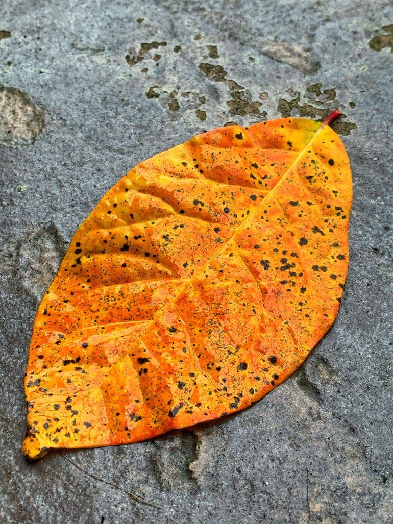 Vibrant Fall Foliage in Eugene, Oregon