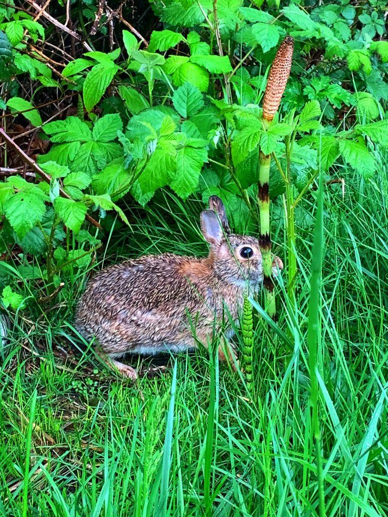 A Spring Bunny