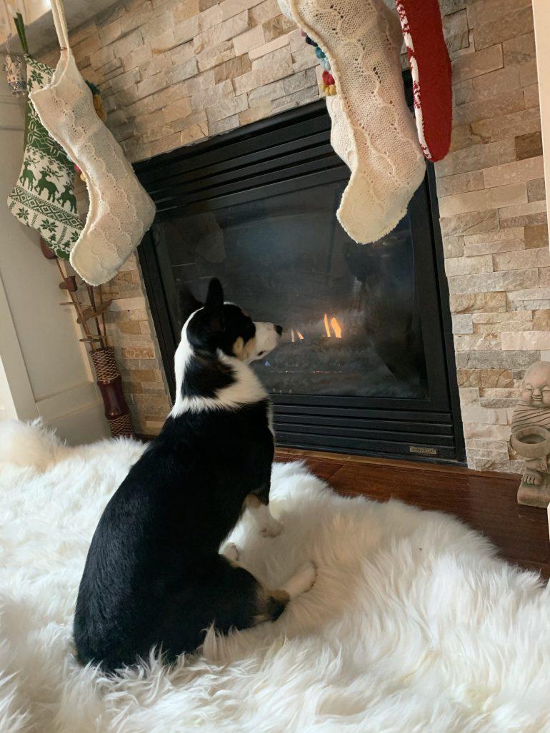 Santa Watch 2020: Wilbur the Corgi