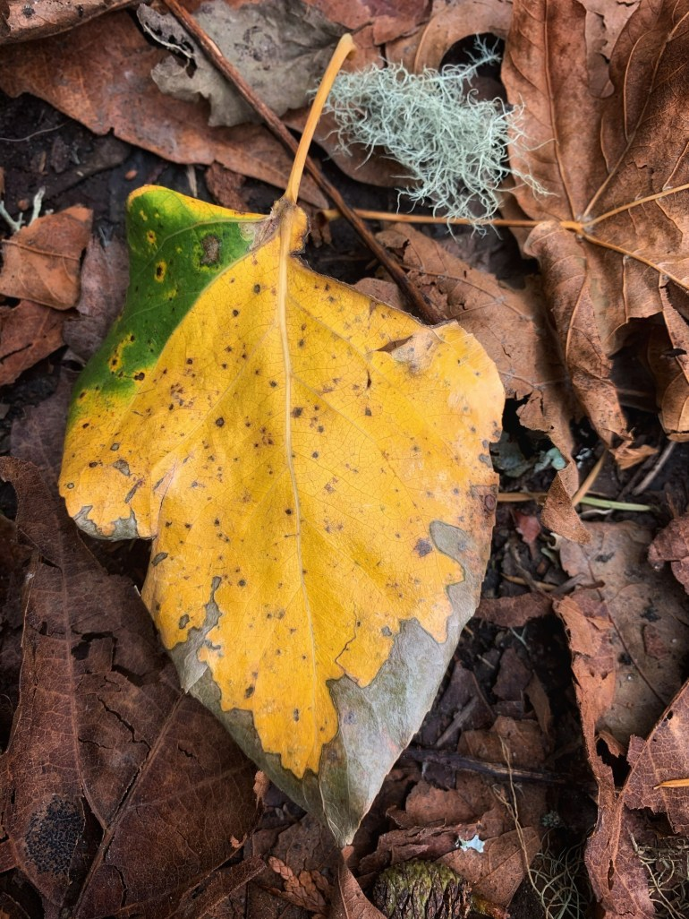 Fall Still Life: At the Sehome Arboretum in Bellingham, Washington