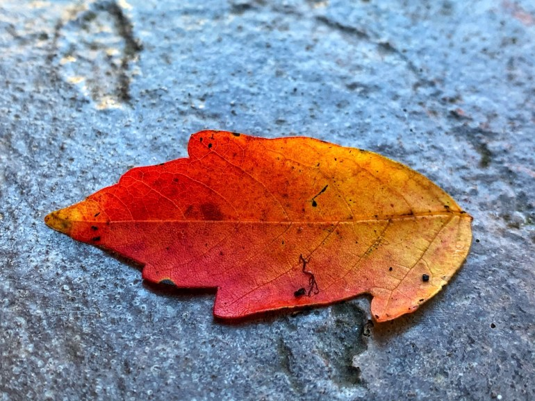 Celebrating Color: Fallen Leaves