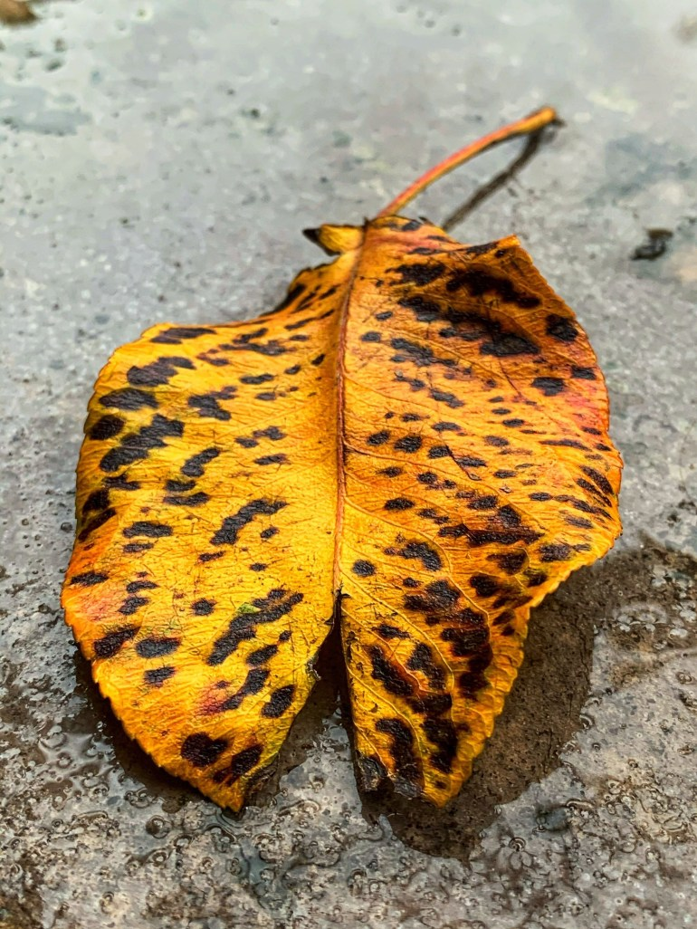 """""""It must be October, the trees are falling away and showing their true colors."""" ― Charmaine J Forde"""