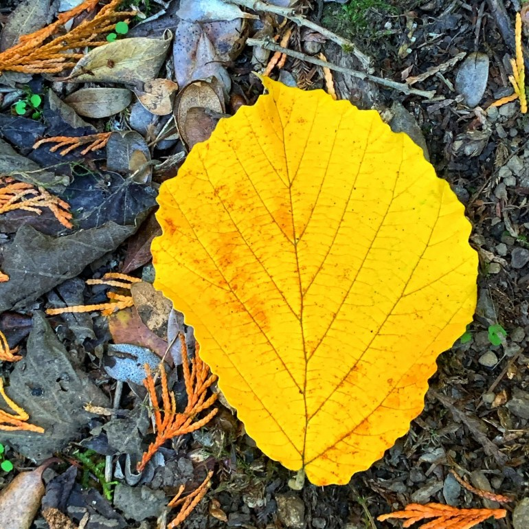 """""""Leaves are love letters that fall from the sky, in the brightest of colors see how they fly! from the fall/autumn poem, Step Out in Color!"""" ― Suzy Davies, Celebrate The Seasons"""