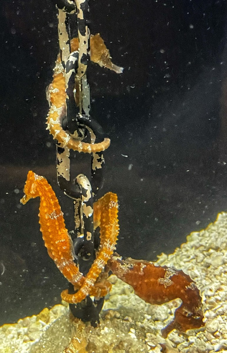 The Oregon Coast Aquarium in Newport, Oregon