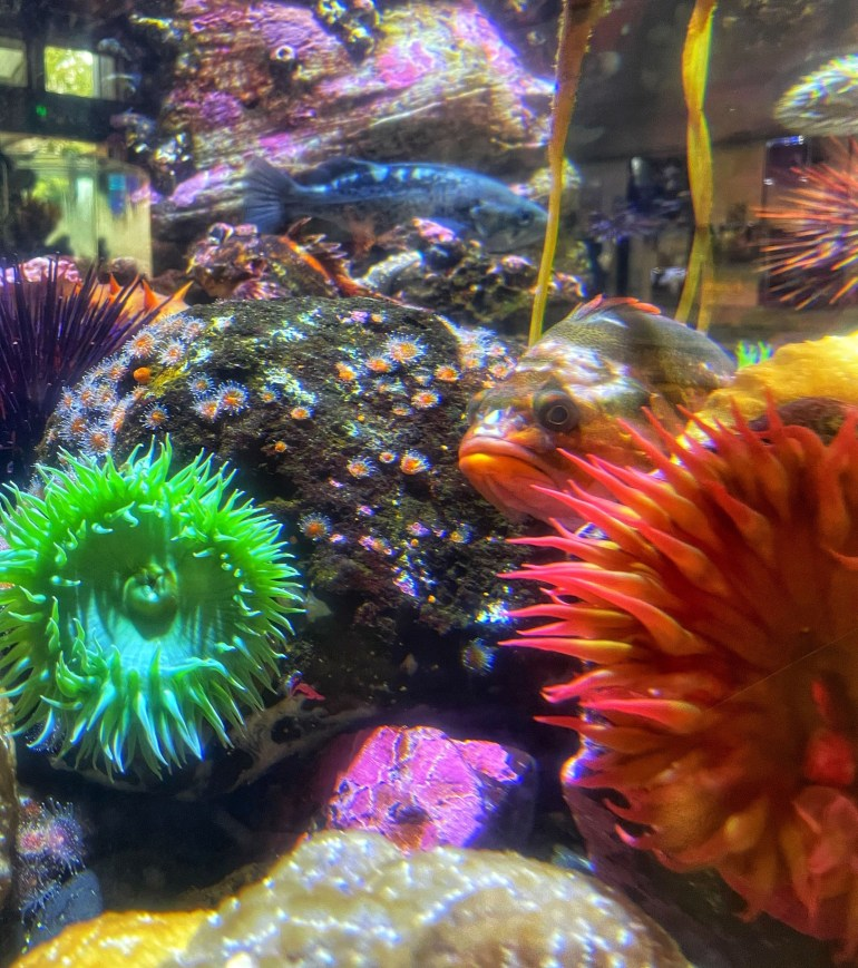 The Oregon Coast Aquarium in Newport, Oregon