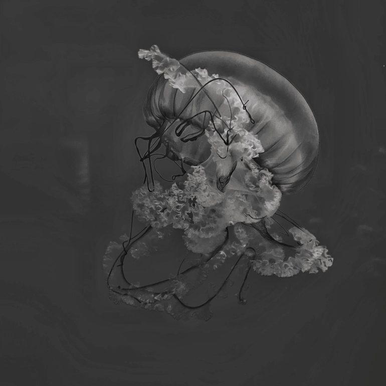 Black and White: Jellyfish at the Oregon Coast Aquarium in Newport, Oregon