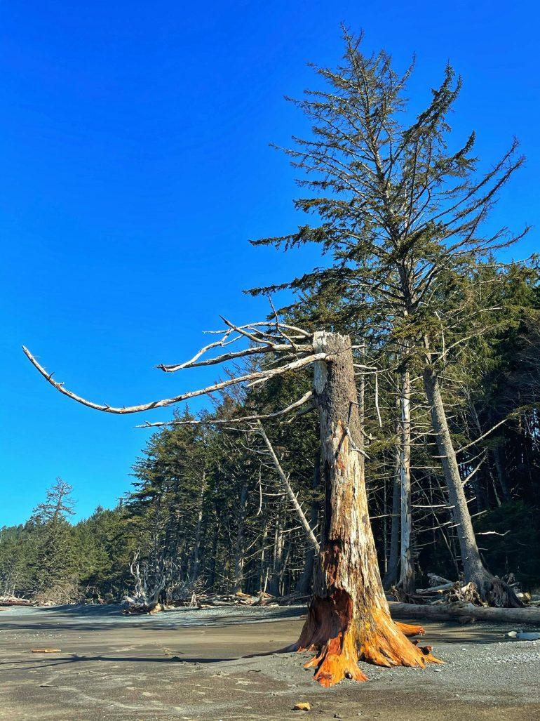 An Afternoon at Rialto Beach on the Washington Peninsula