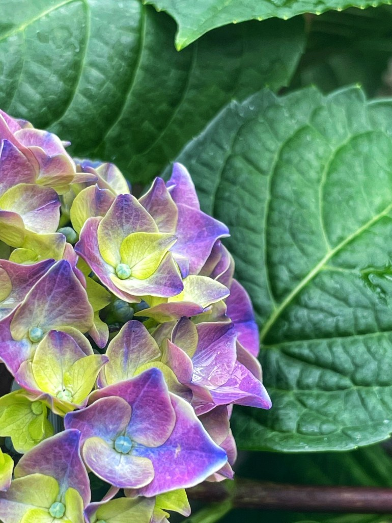 Photo taken at Brothers Greenhouse in Port Orchard, Washington