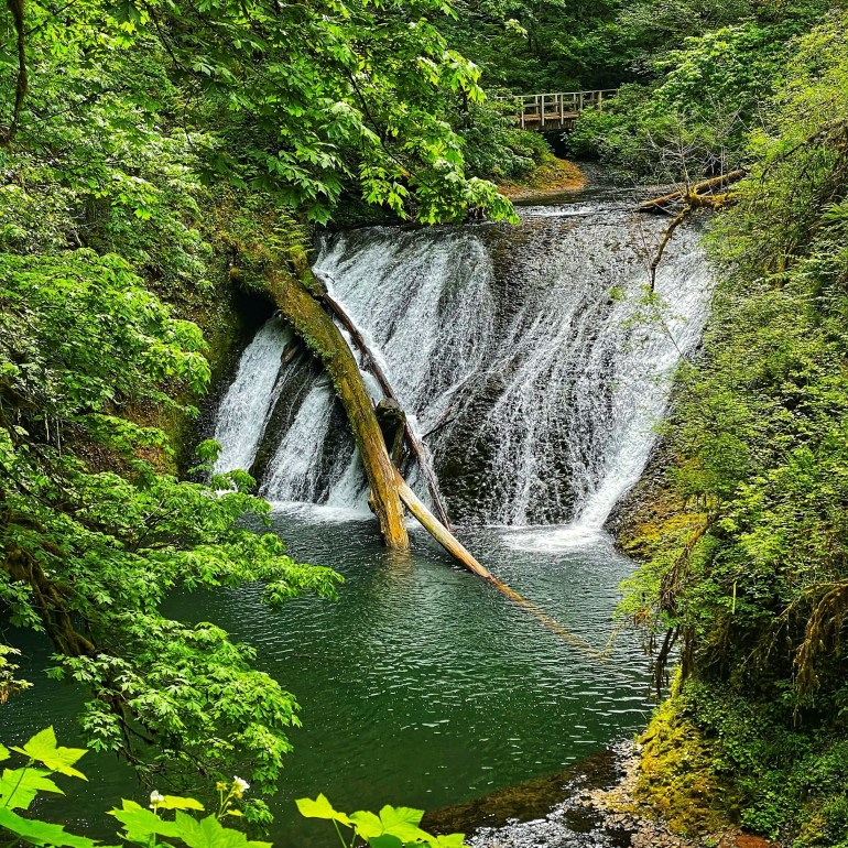 Waterfalls and Trees at Silver Falls State Park in Oregon