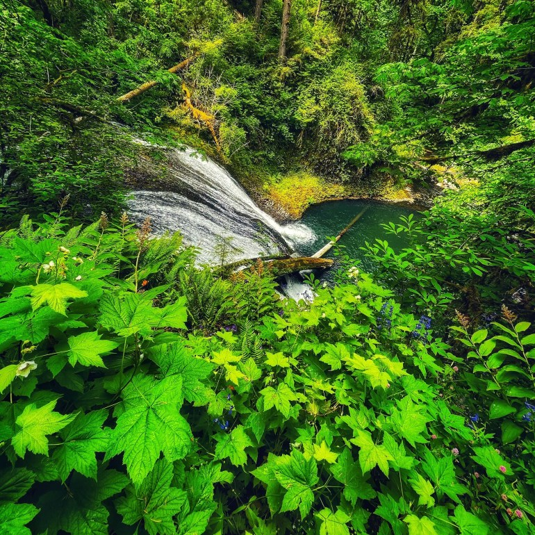 Over the Waterfall at Silver Falls State Park in Oregon