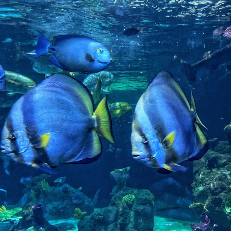 Blue Fish, Blue Water at the Point Defiance Zoo and Aquarium in Tacoma, Washington