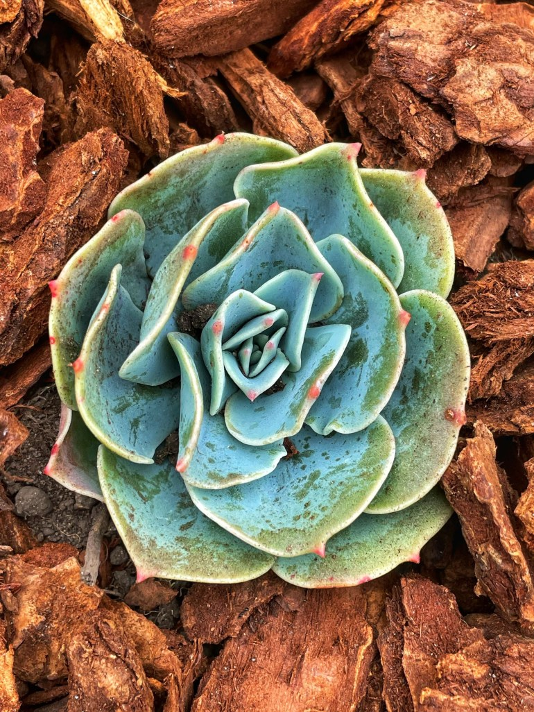 """""""Go wherever the succulents are."""""""
