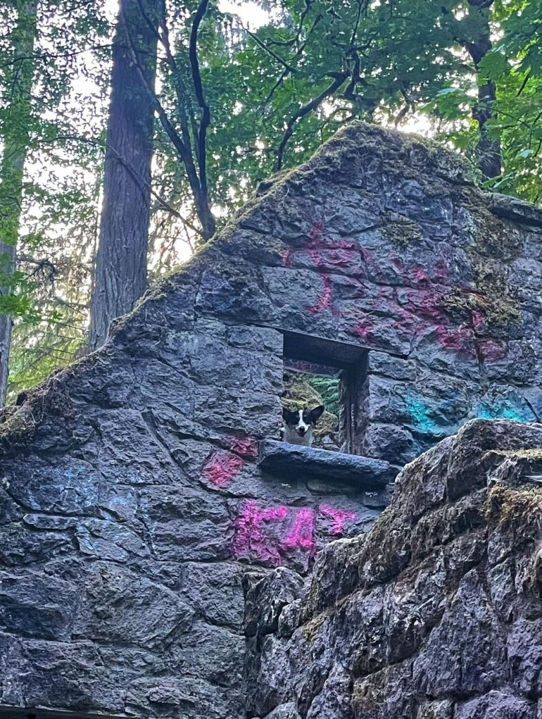 Where's Wilbur? At Witch's Castle at Forest Park in Portland, Oregon