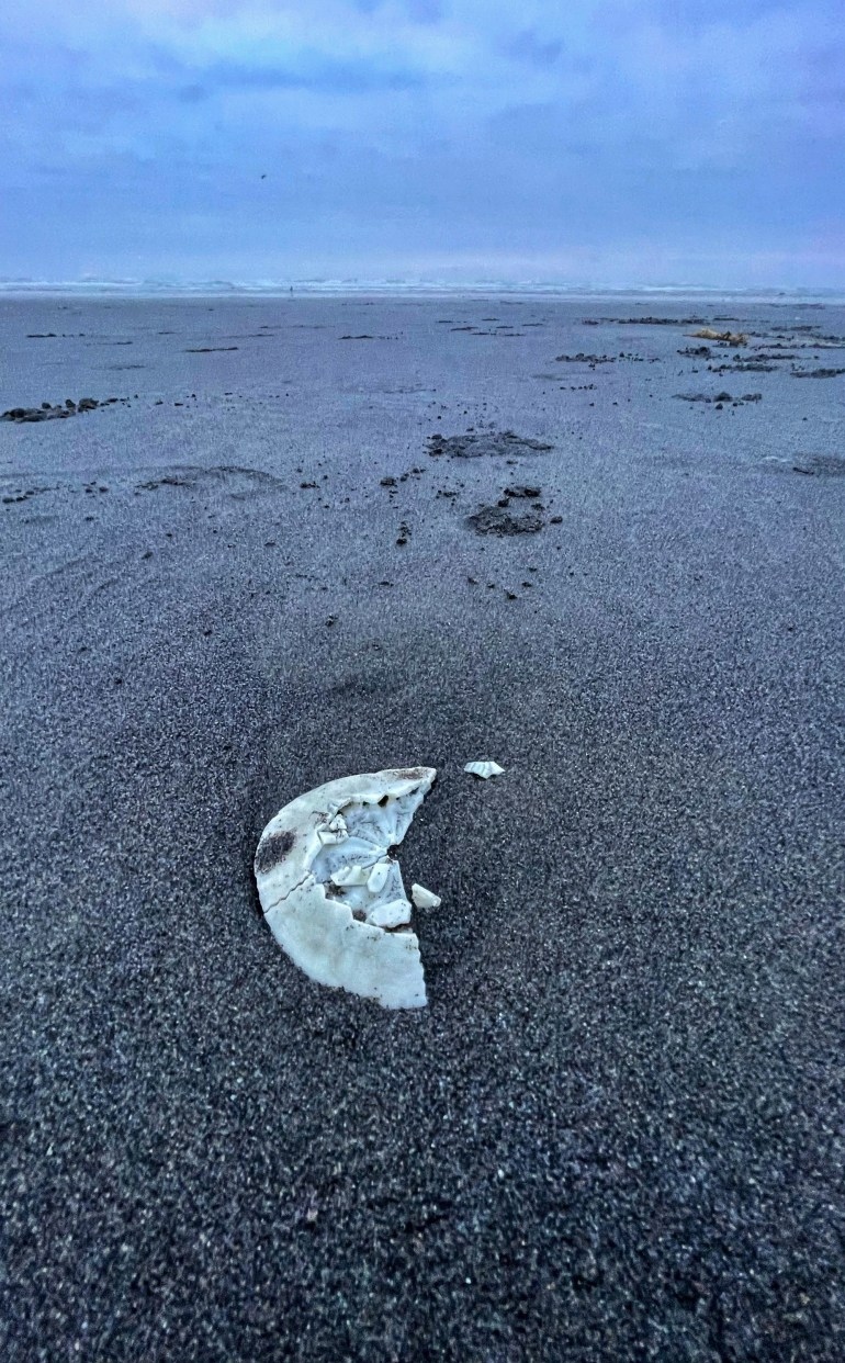 Found Objects: A Sand Dollar on the Beach in Seaside, Oregon