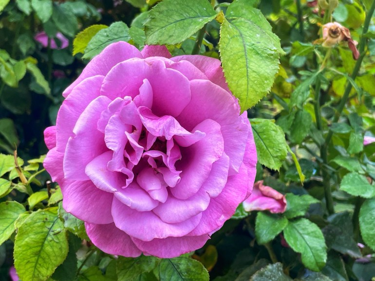 Flower of the Day for October 10, 2021
