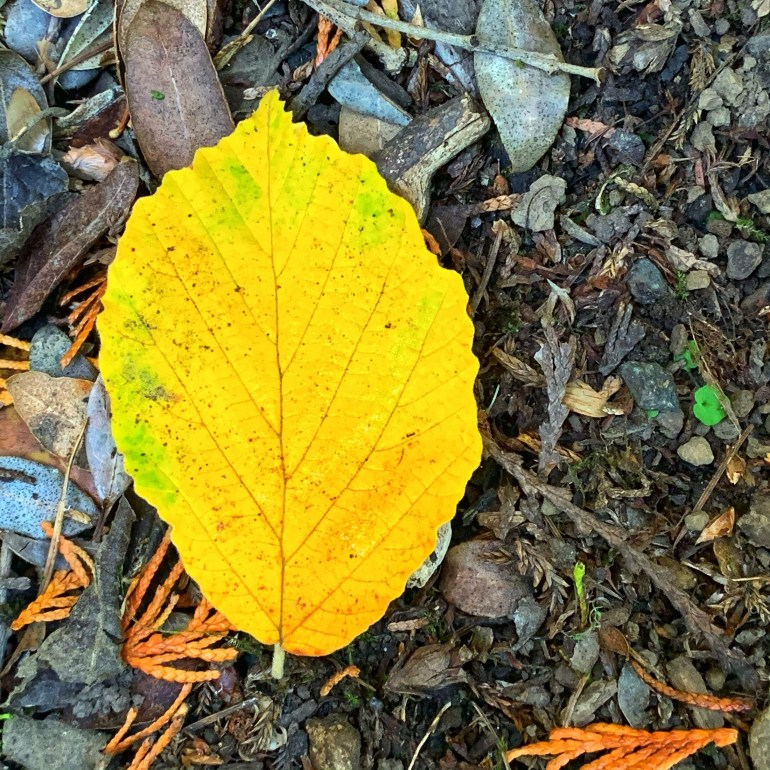 Early Fall Colors at the Hoyt Arboretum in Portland, Oregon