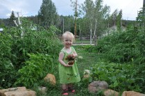 Who says you can't grow tomatoes at 7,000 ft?