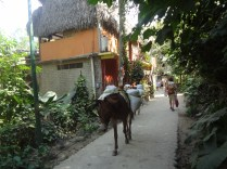 "Cruising the ""streets"" of Yelapa on Papa's back"