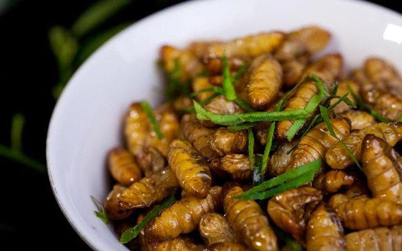Los 10 platos ms extraos de Vietnam  OneMoreDestinationcom