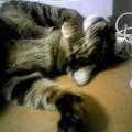 愛猫にリコネクティブヒーリング
