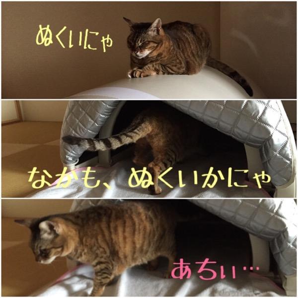 猫は遠赤外線サウナに入るか?