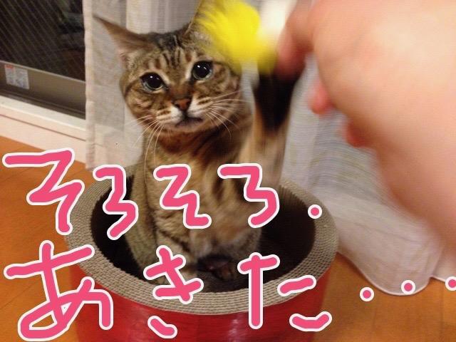 猫は少なくとも人間を同等と思っているふしがある
