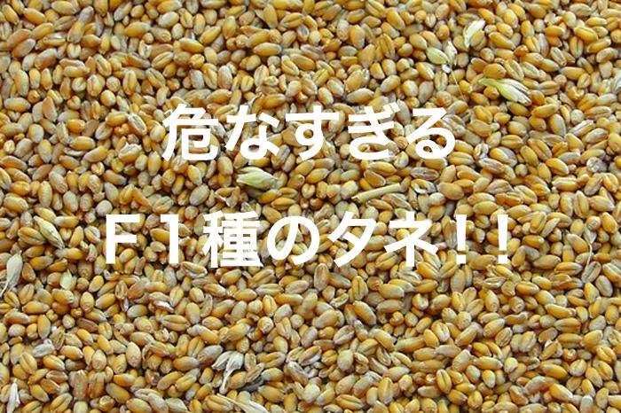 seeds0624gg