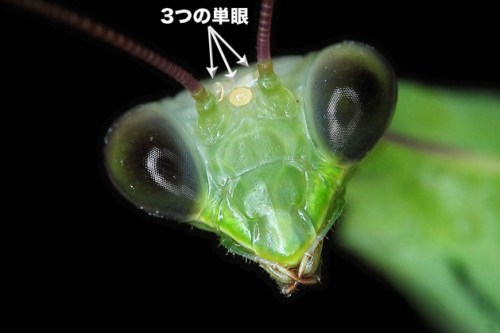third-eye-of-mantis