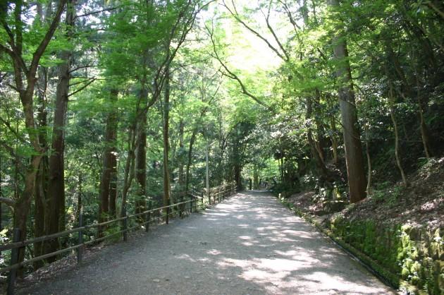 5kurama-yamamichi