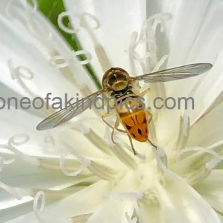 one of kind photos N4032, Bee Nirvana, Dimensions, 509 X 471