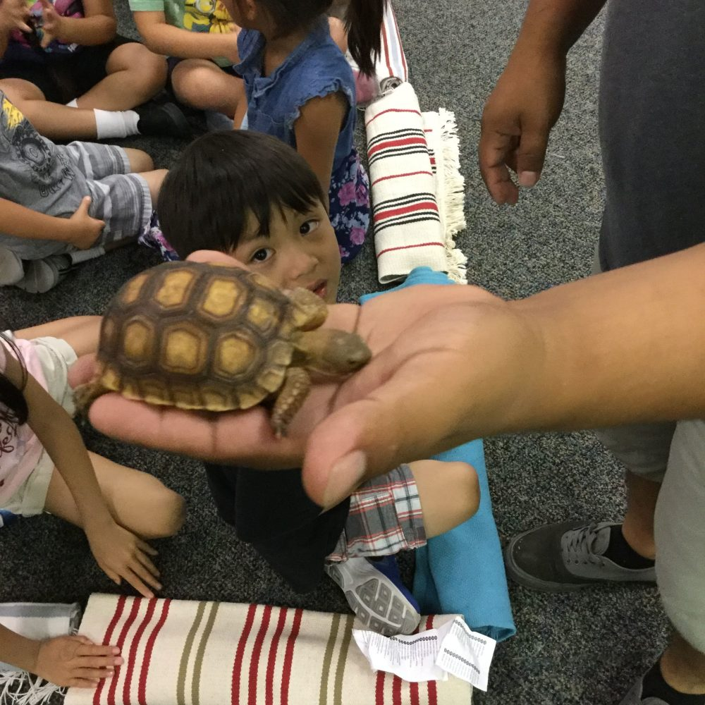 Room 8: Reptile Show (July 2018)