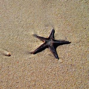 Single Starfish