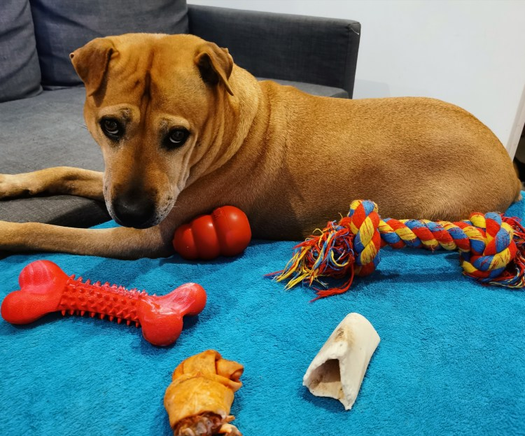 Which dog toys are best to keep your dog entertained?