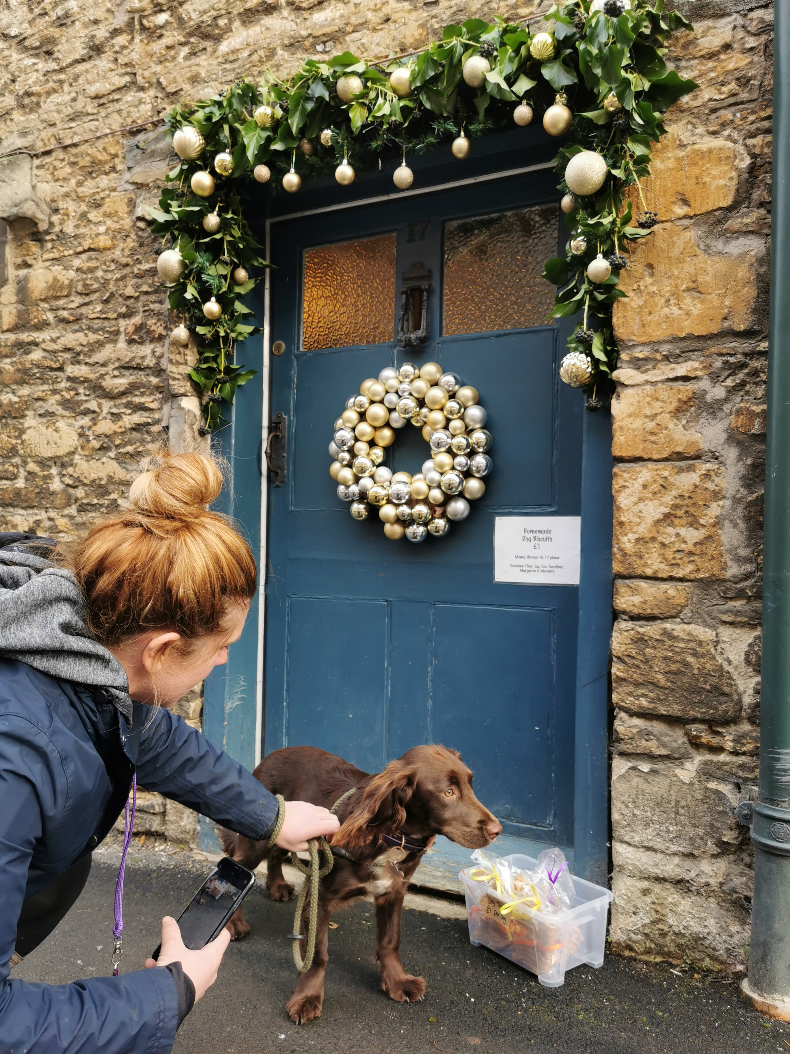 Posing dog outside house in Lacock village