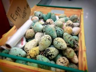 Razorbill Eggs at the super market