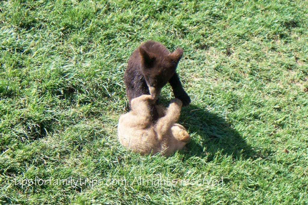 Black Hills Vacation - Bear Country USA