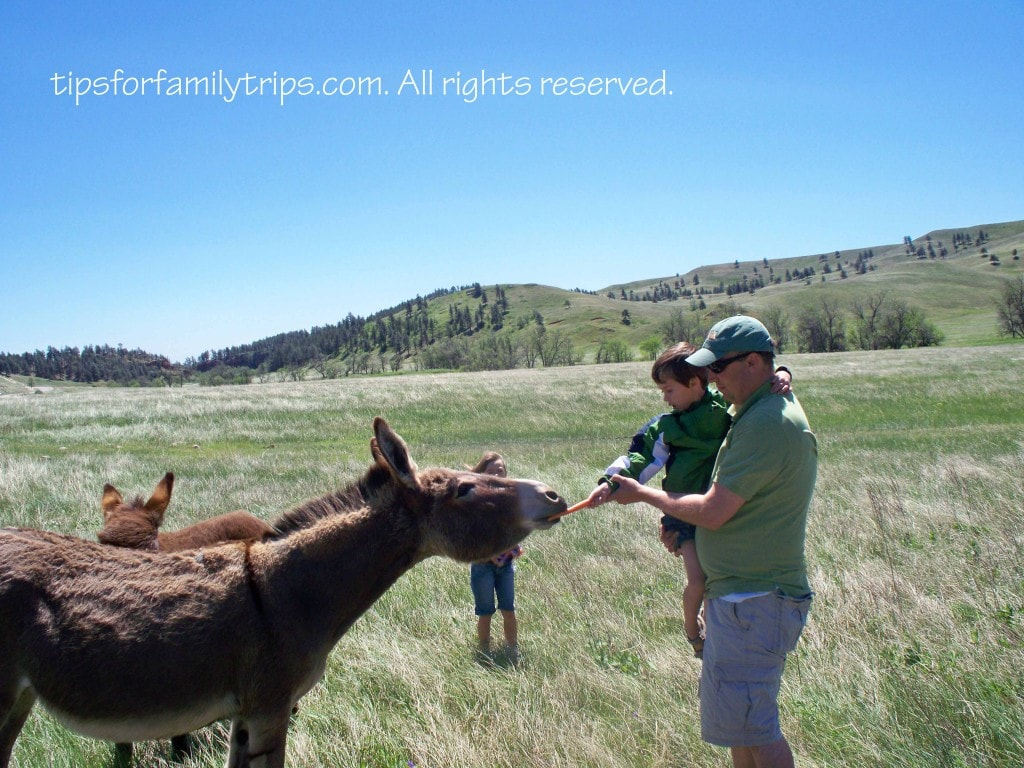 Black Hills Vacation