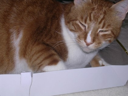 Another boxtop in Sam's collection of boxes