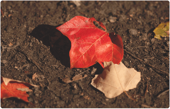 Falling Leaves Wallpaper Blackberry Nurture Photography Fall Challenge Red Foliage